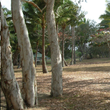 illawong3