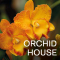 orchid-house