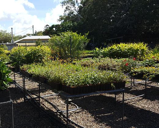 Mackay Natural Environment Centre