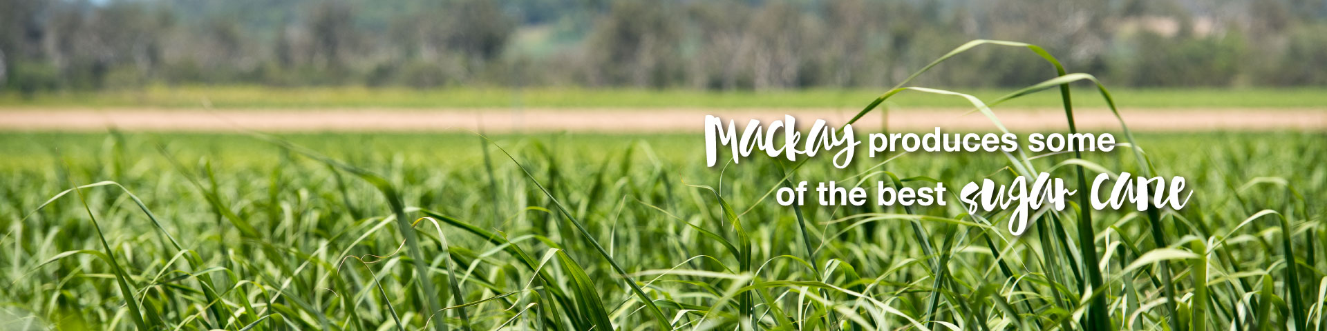 Mackay produces some of the best sugar cane