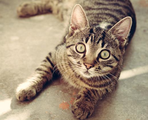 Responsible cat ownership