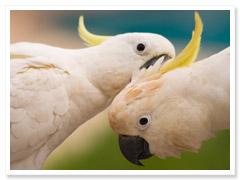 Nurture and conserve biodiversity
