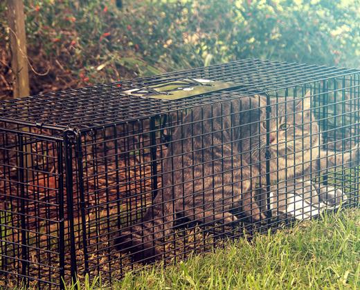 Hire of cat traps