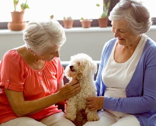 Senior pets for senior people