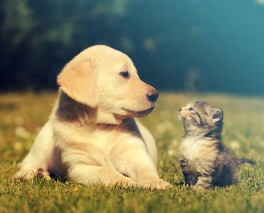 Animal Management Strategy